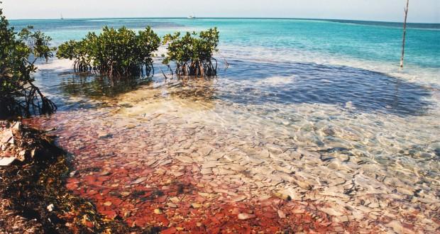 caribbean-shore-1473795-1278x855
