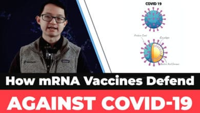 Photo of How mRNA Vaccines Defend Against COVID-19